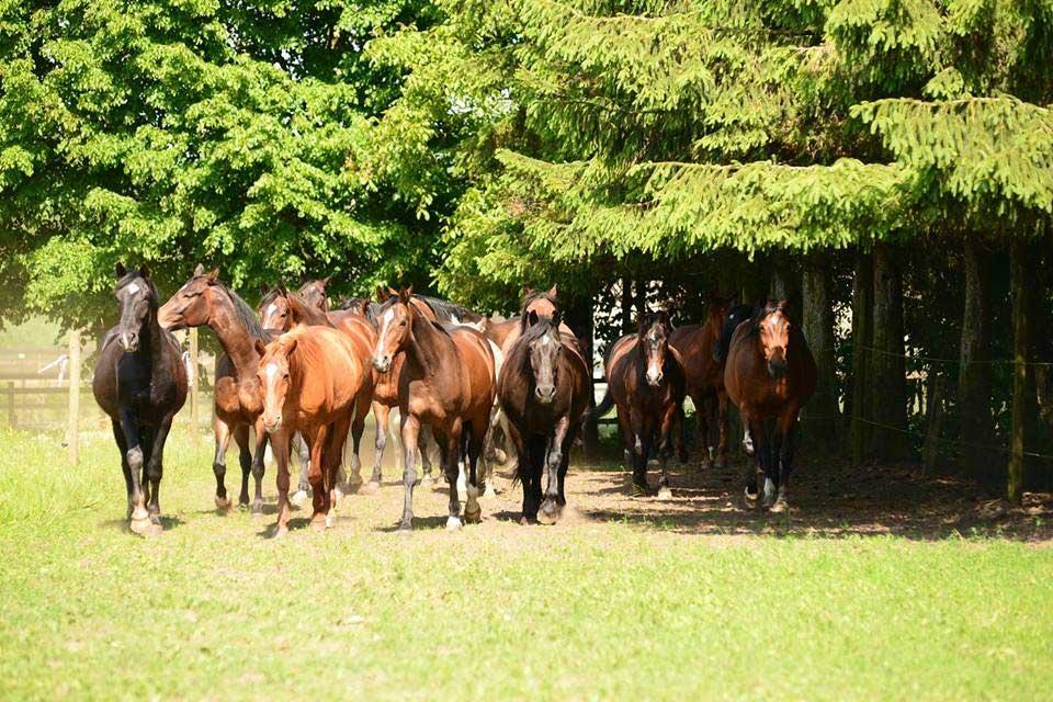 Paarden poedertoren
